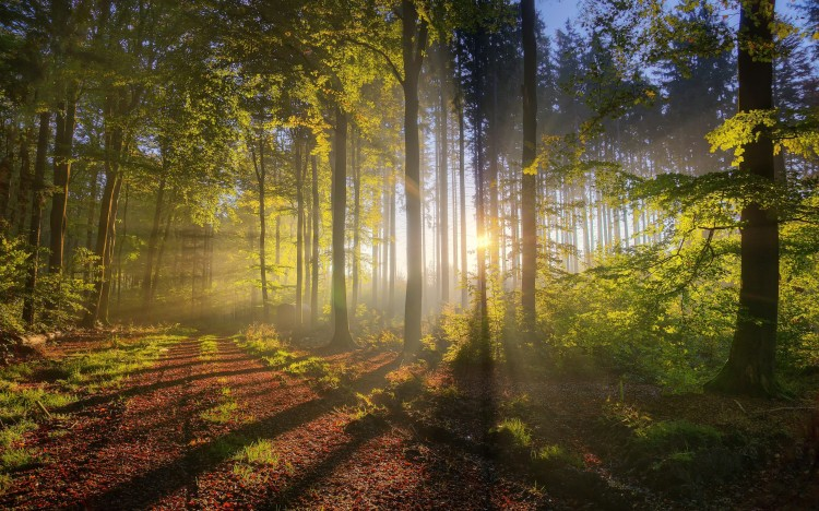 landscapes-nature-trees-forest-sunlight-fresh-new-hd-wallpaper-best