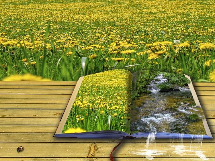 picture-book-1983812_960_720