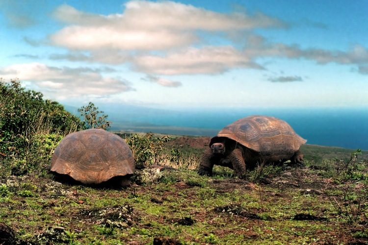 (Ecuador) – Galápagos Islands 3